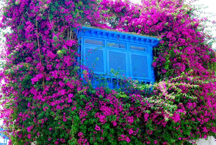 window in Sidi Bou Said