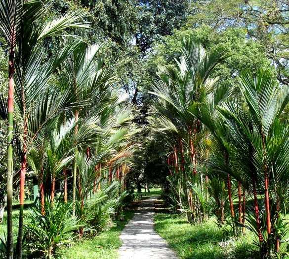 Vegetación en Jardín Botánico Lancetilla