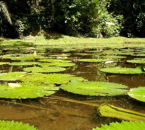 Verde en Jardín Botánico Lancetilla