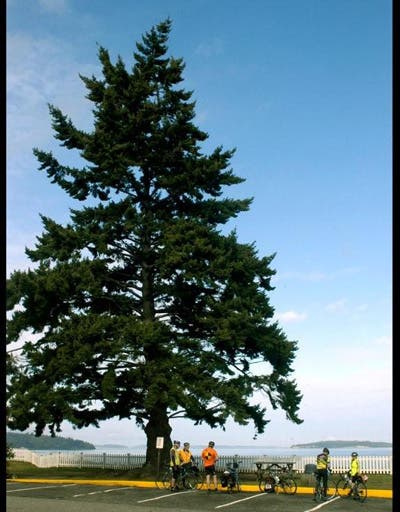 Planta en Erlands Point-Kitsap Lake