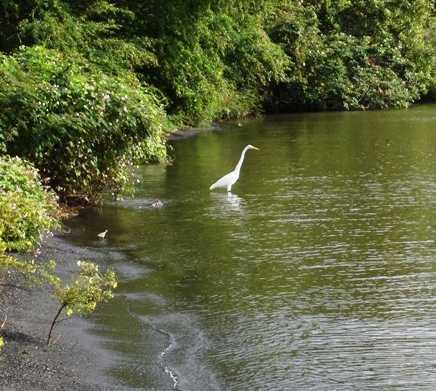 Masa de agua en Reserva Natural Charco Verde