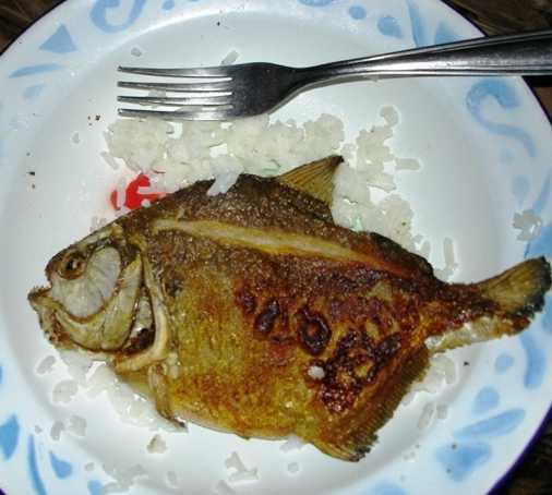 Comida en Pescar pirañas en el lago Valencia