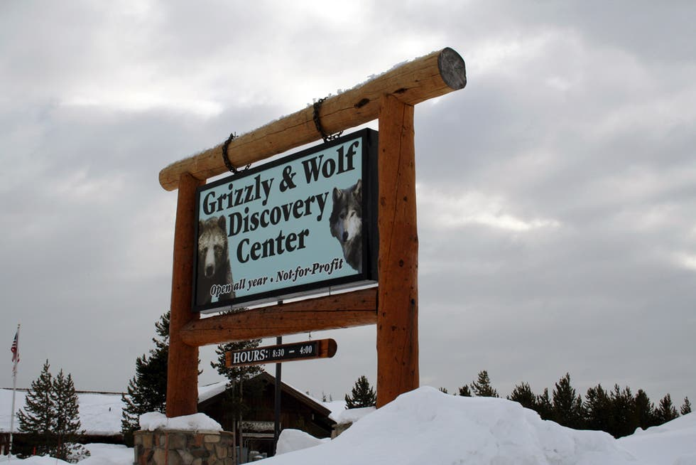 Nieve en Parque Grizzly & Wolf Discovery Center