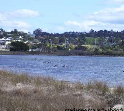 Orilla en Batemans Bay