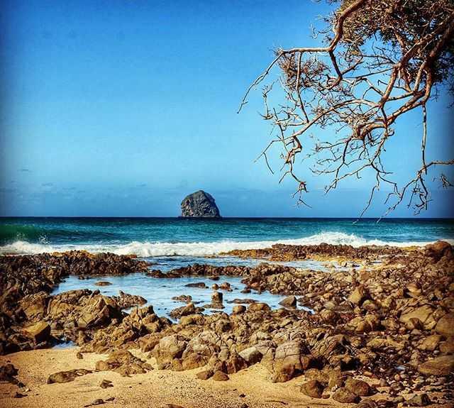 Árbol en Isla Rocher du Diamant