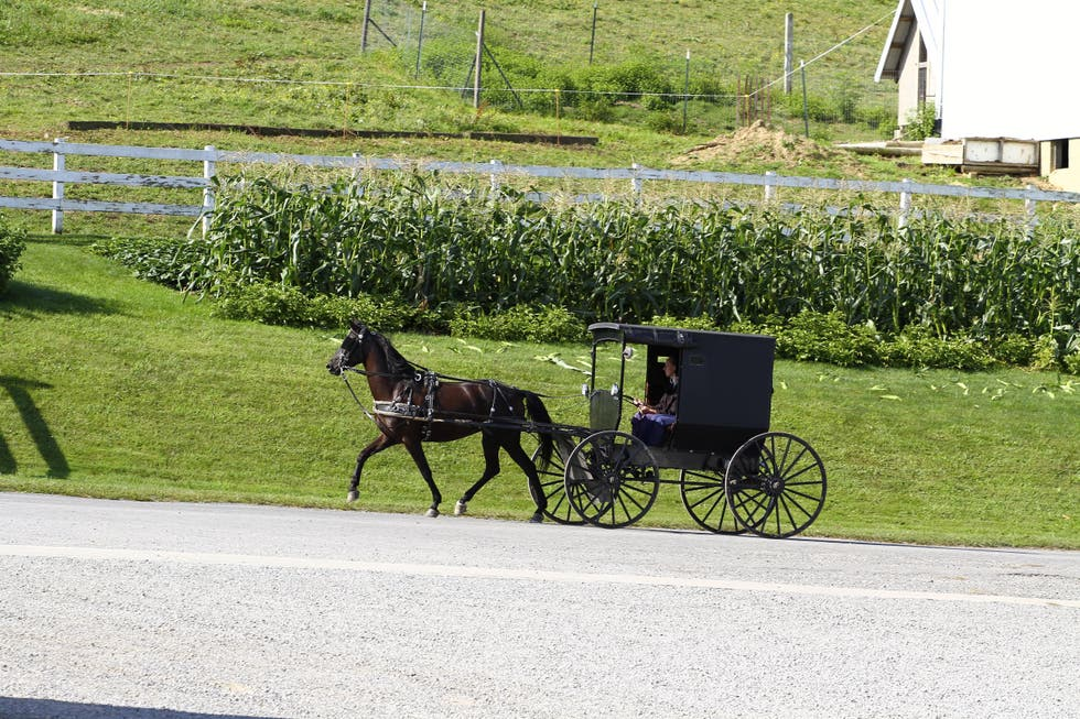 Horse and buggy à Sugarcreek