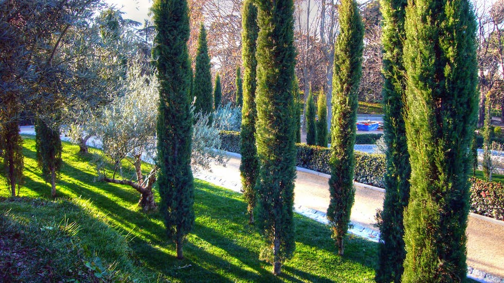 Photos of los ausentes forest images - Madrid forest ...
