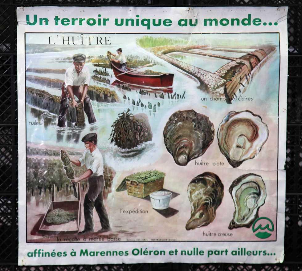 Huître de Marennes Oléron