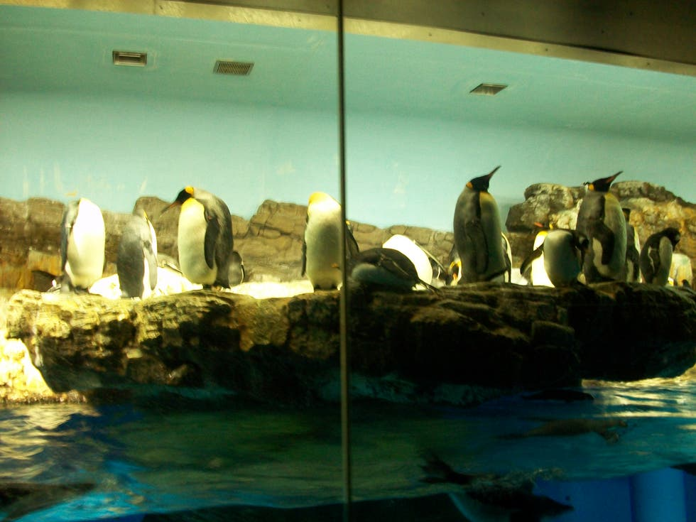 Mar en Penguin Encounter en Sea World