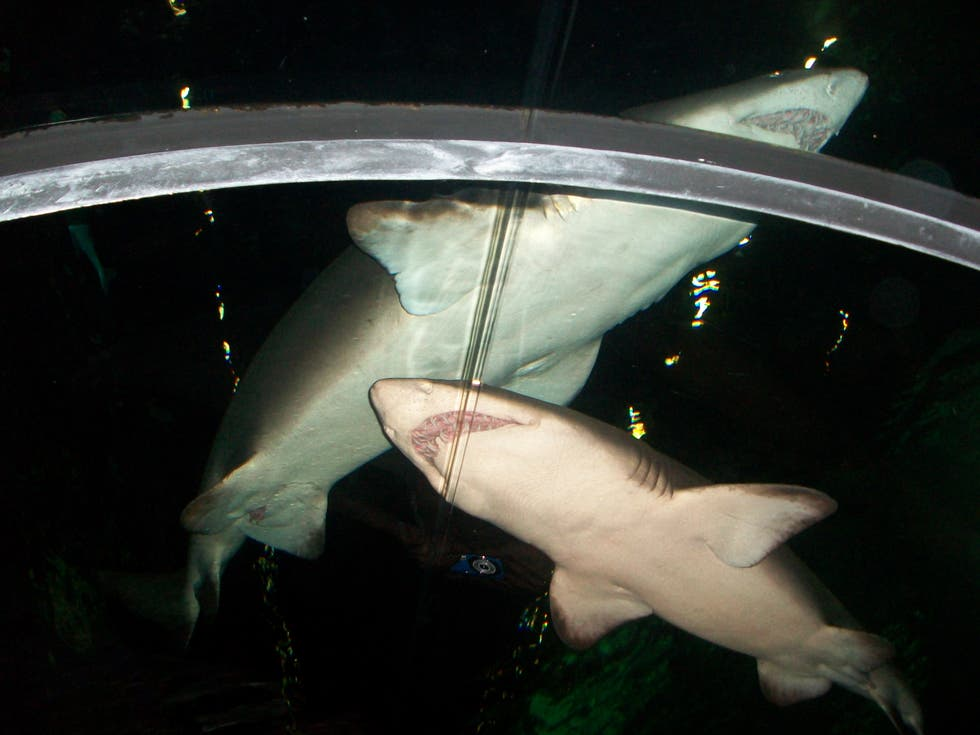 Animal en Shark Encounter