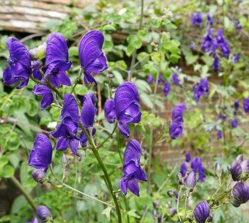Flor en Great Dixter House & Gardens