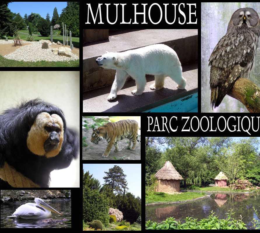Photos de parc zoologique et botanique de mulhouse for Parc sauvage 78