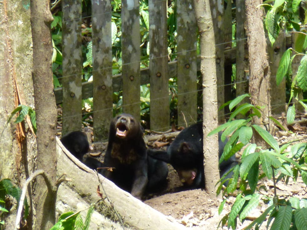 Bosque en Bornean Sun Bear Conservation Centre