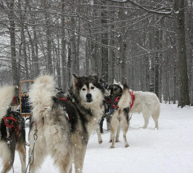 Perro en Beaupré