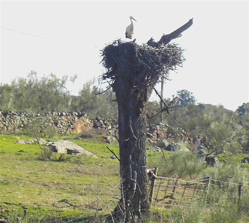 Planta en Aldea del Cano