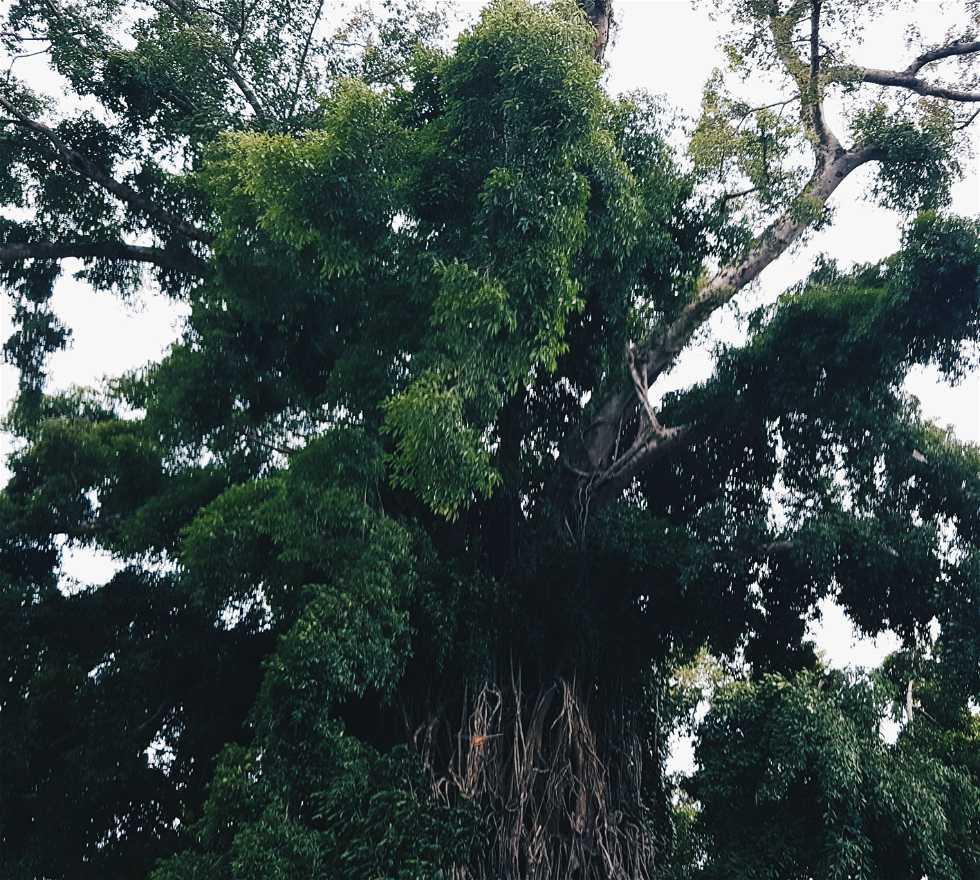 Vegetación en Baler
