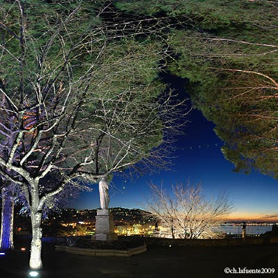 Tree in Cannes