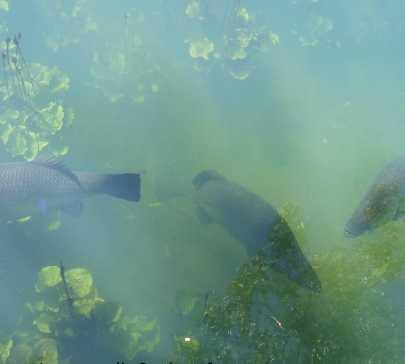 Biología marina en Howard Springs