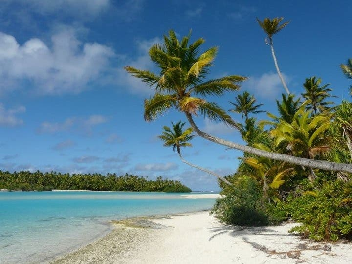 Vegetation in Aitutaki