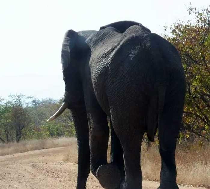 Wildlife in Skukuza