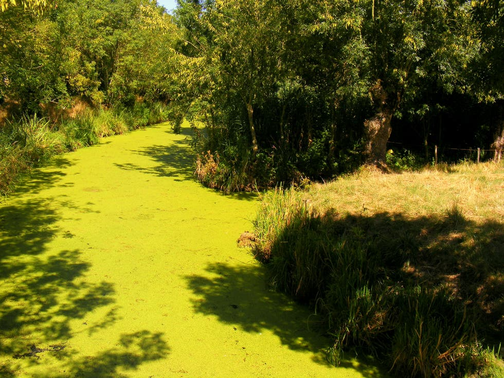 Green in Coulon