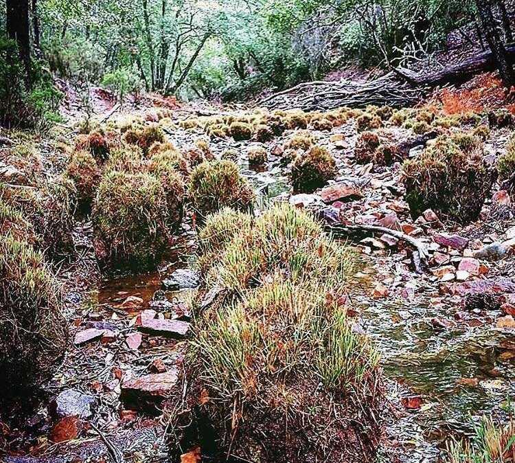 Creek in Puebla de Don Rodrigo