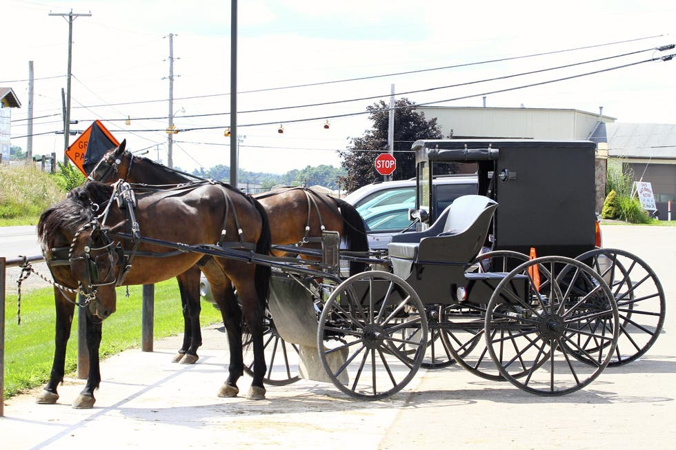 Horse And Buggy in Walnut Creek