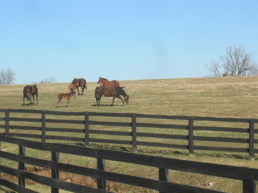 Granja en Kentucky Bluegrass