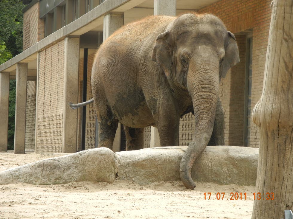 Elephant in Berlin Zoo