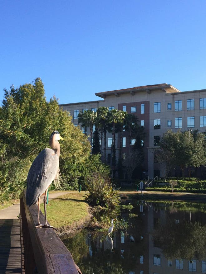 Photos Of Waterway In Hilton St Petersburg Carillon Park