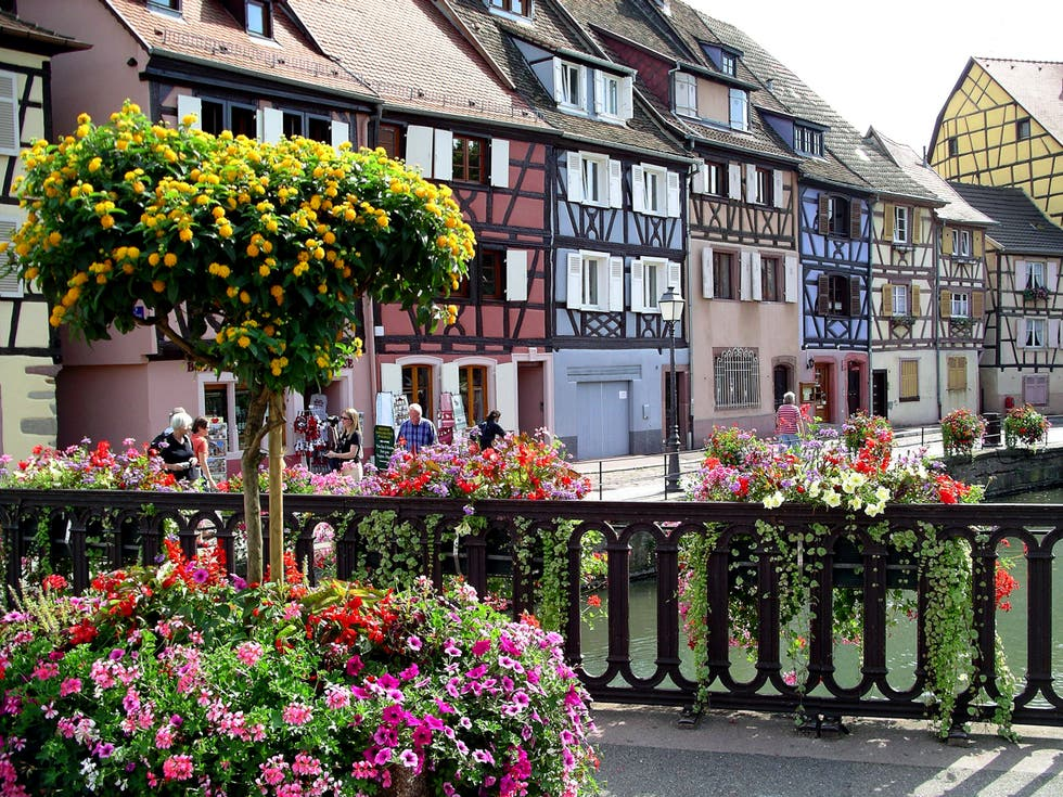 Flower in Colmar