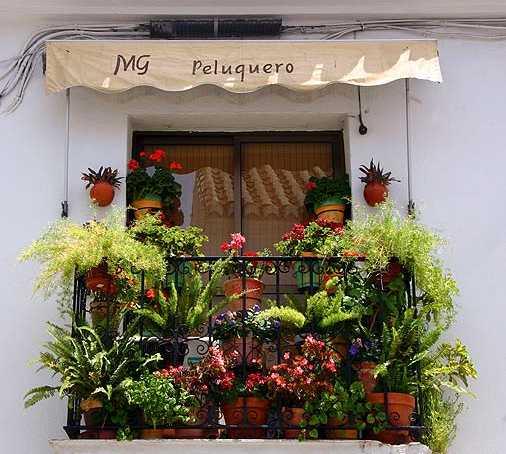 Floristería en Calle Los Caños