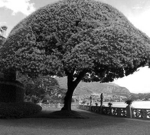 Árbol en Villa del Balbianello