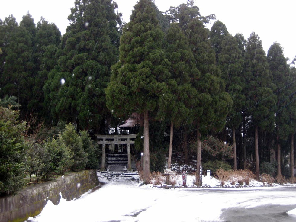 Conifer in Minamata