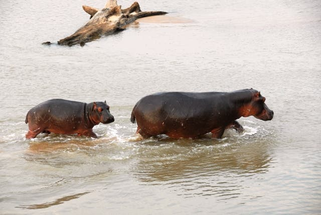 Sea in North Luangwa National Park