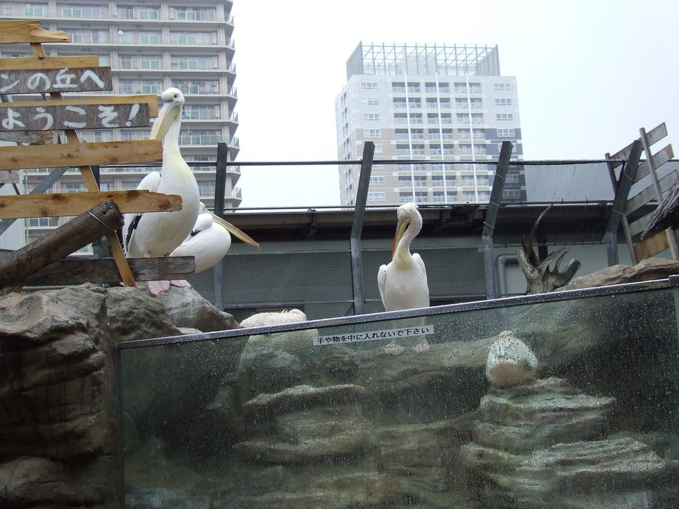 Escultura en Sunshine International Aquarium