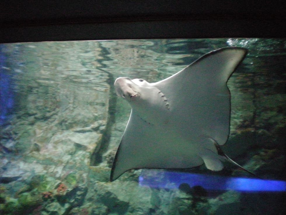 Pez en Sunshine International Aquarium