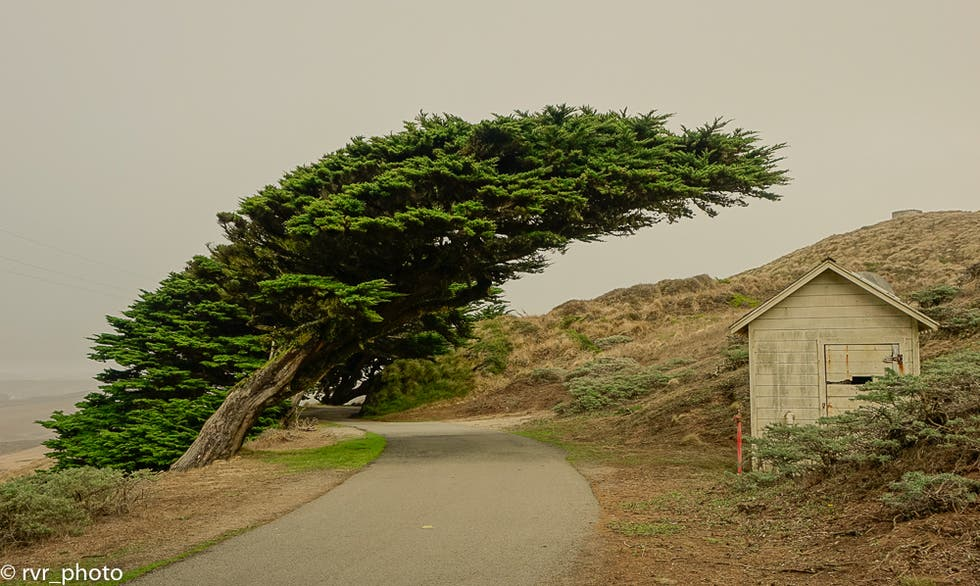 Natura a Point Reyes Station