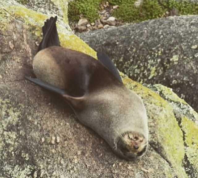 Animal en Cabo Foulwind