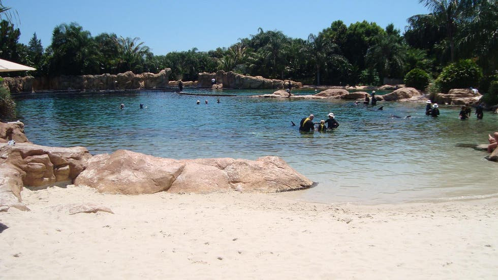 Arena en Discovery Cove