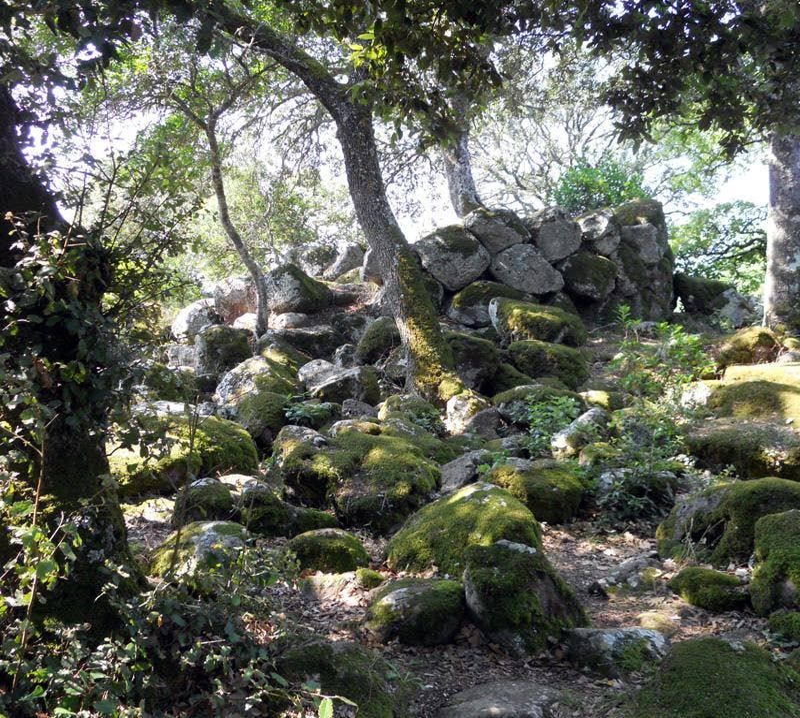 Árbol en Giara di Gesturi