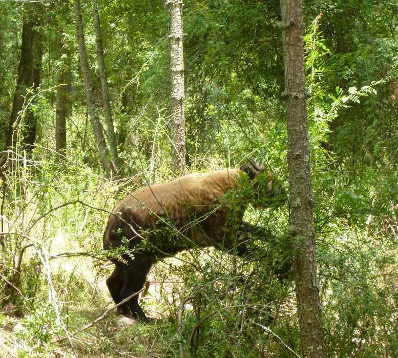 Fauna silvestre en Thimphu