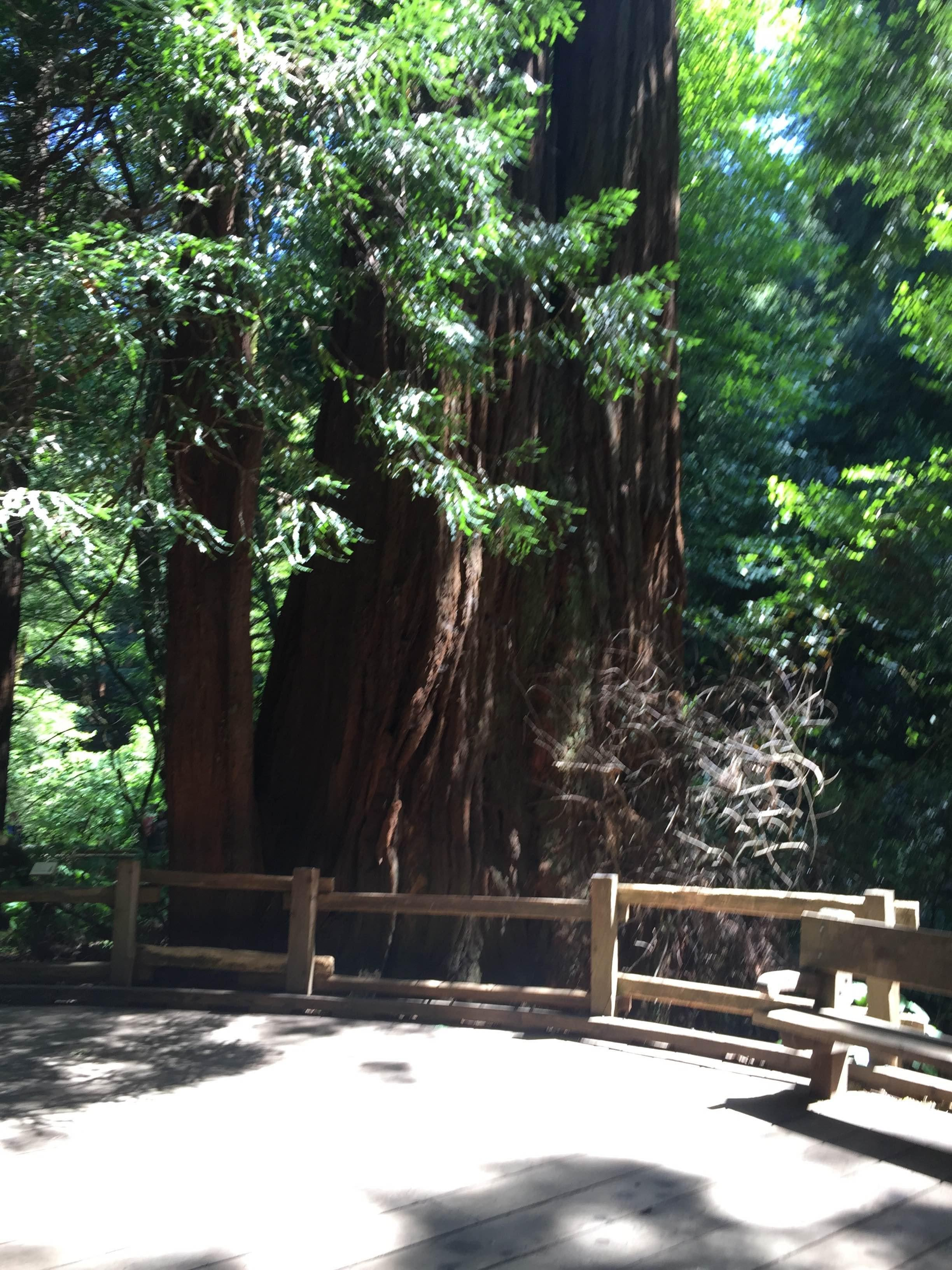 muir woods national monument Muir woods is famously crowded you can beat the crowds, see more wildlife and have more fun on this easy 35 mile loop on the canopy view trail.