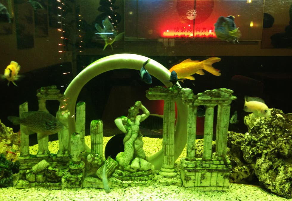 Acuario en Restaurante New Friends