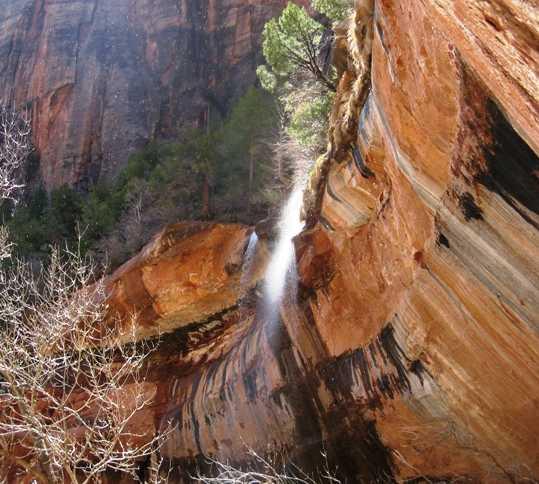 Tronco en Parque nacional de Zion