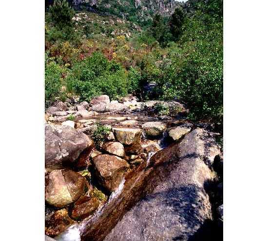Piedra en Parque Natural Baixa Limia- Serra do Xurés