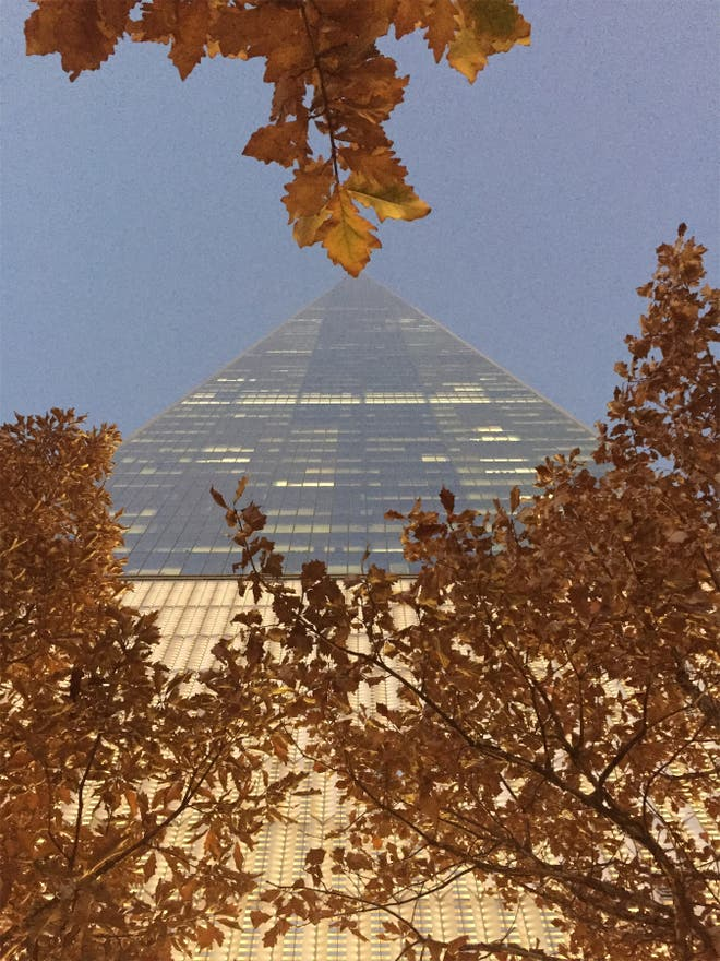 Árbol en One World Trade Center