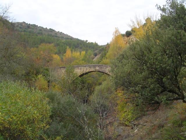 Fourré à Valdesotos