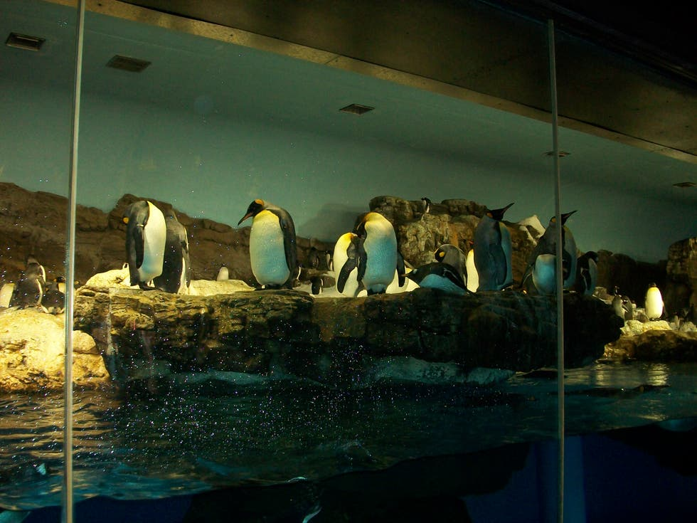 Turismo en Penguin Encounter en Sea World