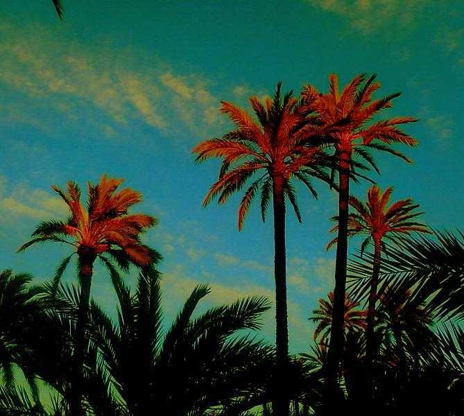 Hoja en Fin de semana Alicante